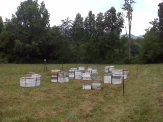 Sourwood Honey, Raw Honey, Local Honey, Honeybees
